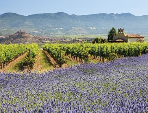 Actividad Viviendas de Uso Turístico (La Rioja)